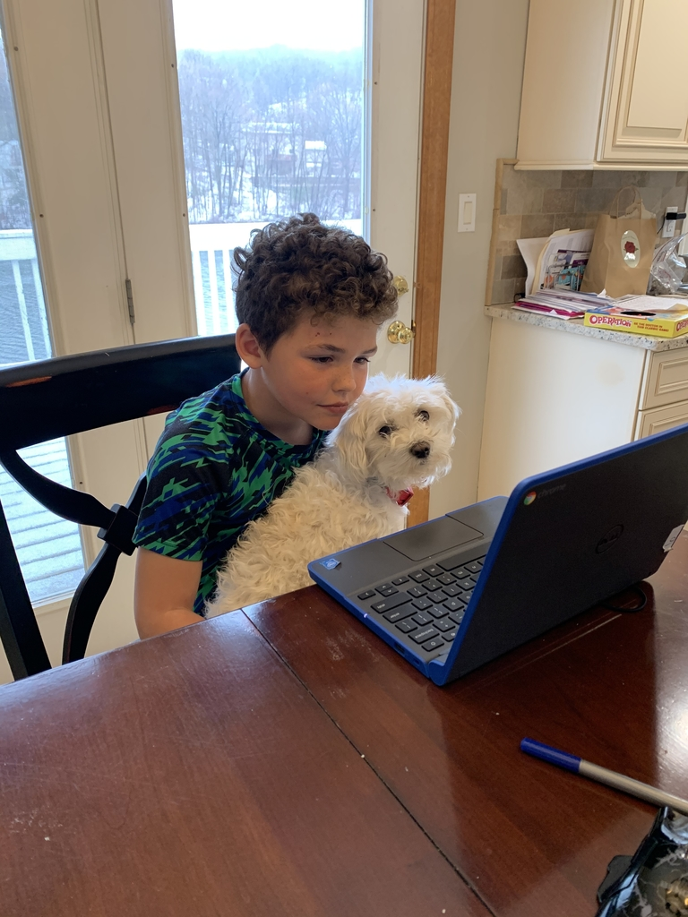 One of The Curry Kids on a video conference with our pup Luna!